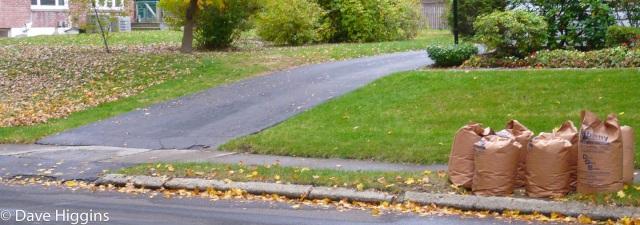 leaf line between two yards