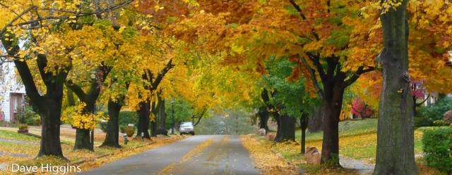 Residential street with fall leaves