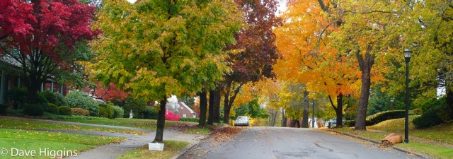 Neighborhood with trees in the fall