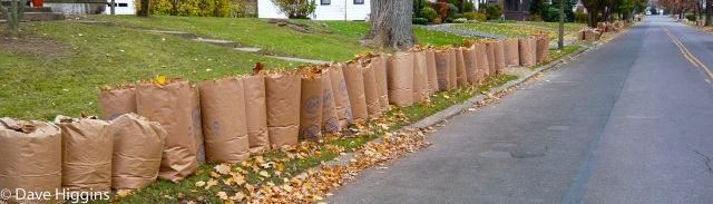 Lots of leaf bags